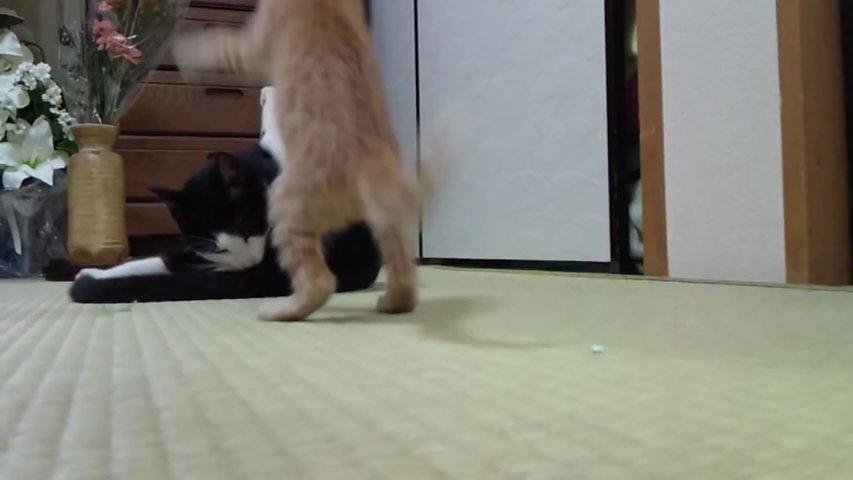 とっても可愛い猫パンチ♡。。。。。コツン♪