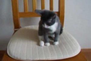 椅子から落ちそうになりながらも、自分のしっぽを追いかける子猫!