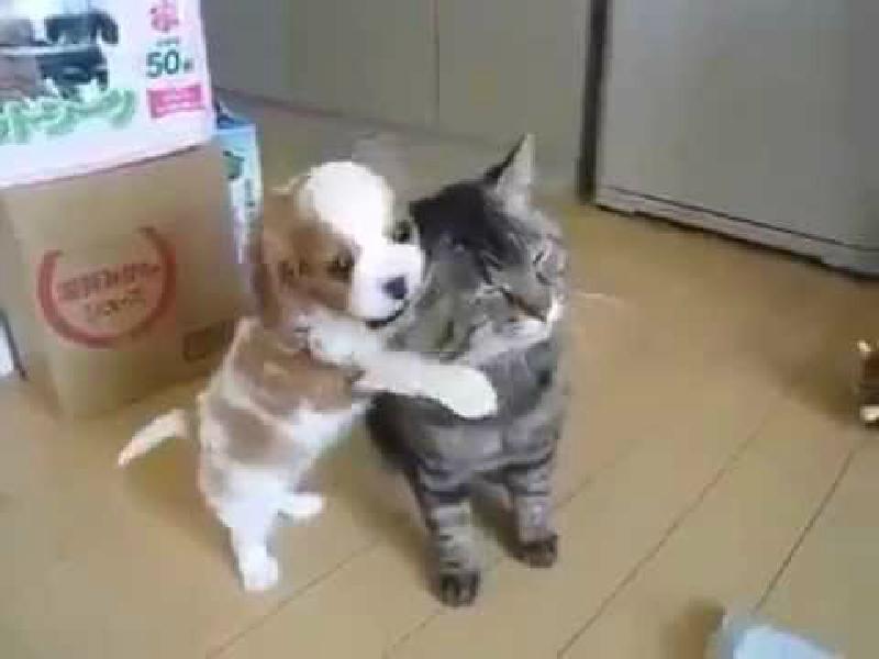 この猫は悟りを開いている…ウザいほど甘える子犬に寛大な猫さん♡