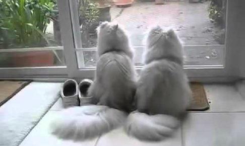 ゆったりした時の流れに癒される♡上品なモップみたいな猫さんたち