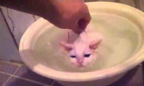 もうここから出たくないの…お風呂大好きな白猫ちゃん
