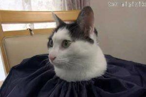 猫が生えてるw 巾着袋の口から、ひょっこり顔を出している猫