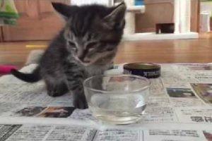 13日目!可愛すぎる子猫ちゃんの初めてのカリカリ美味しいね♪
