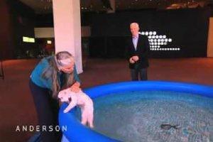 泳げば泳げるけど、別に泳ぐのは好きじゃなさそうな白猫.......
