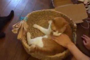 ネコvsヒトの戦い…絶対に譲らない!猫ちぐらに入りたくて必死な猫