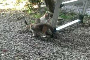 ありがた迷惑?トイレ中の子猫と、埋めてあげる子猫の友情w