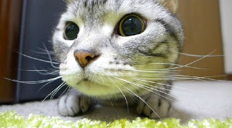 獲物を狙い、リズムに合わせるようにキレッキレに動く猫♪