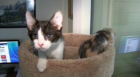 飼い主さんビックリ!ちっちゃな猫ちゃんの大きな?ハプニング。
