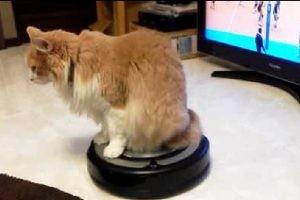 便利な道具で移動も楽になれしかも日常の猫ちゃん