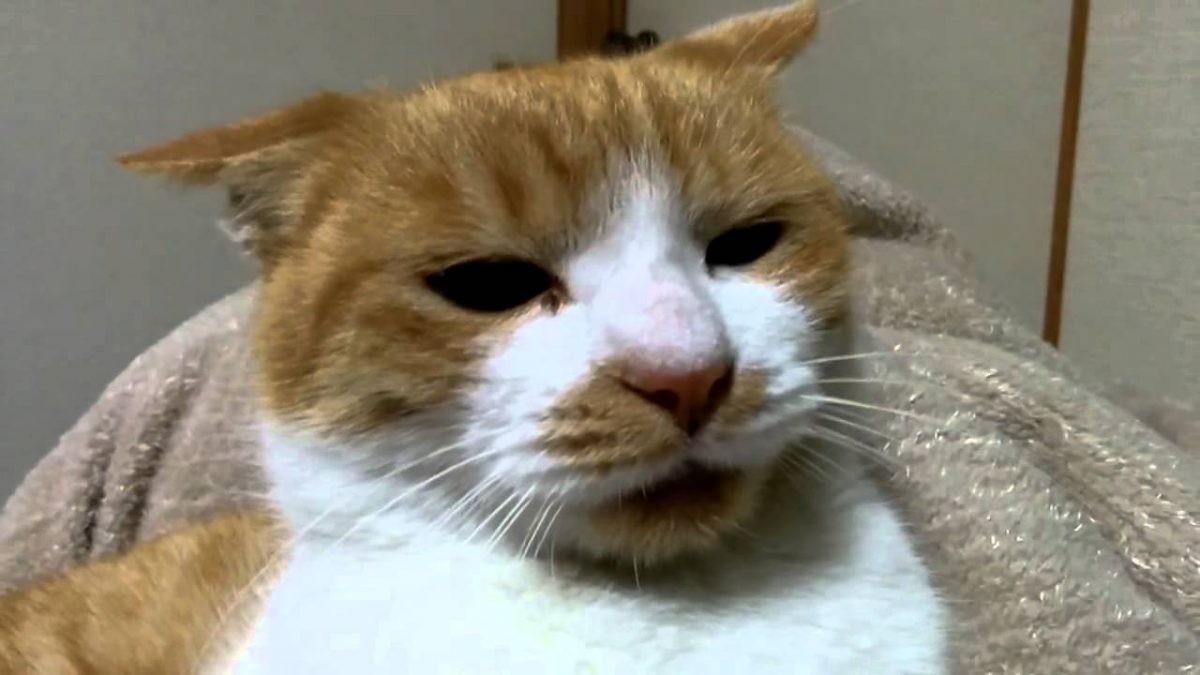 """""""喧嘩中に何かを悟り落ち込む猫 Cats fall in fight"""""""