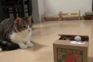 どうなってるの?!ポチっとすると猫が出てくる不思議な箱に困惑猫ちゃん♪