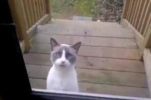 一体これは何語?不思議な鳴き声で怒りまくる猫さんの謎