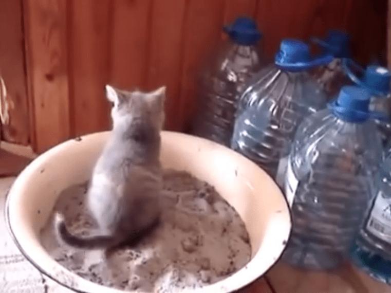 子ネコがトイレでふんばりすぎた結果(;・∀・)