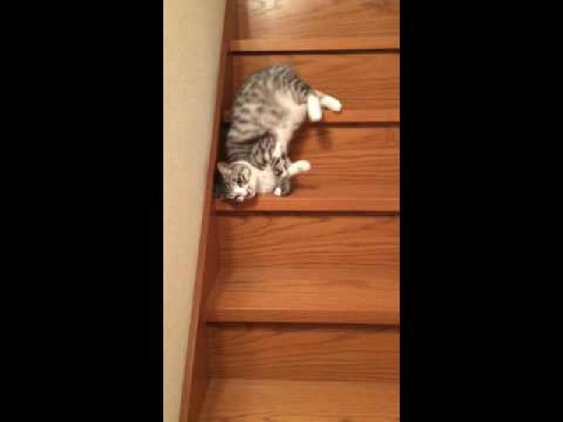 降りるのめんどくさい~!ダラダラと階段を滑り降りる猫….