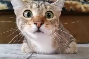 ホラー映画に夢中で目まぐるしく表情も変わる猫ちゃんがとってもキュート💕