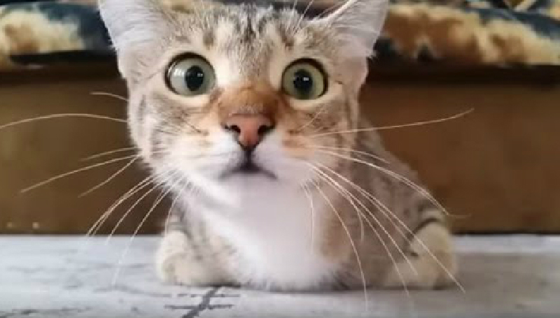 ホラー映画に夢中で目まぐるしく表情も変わる猫ちゃんがとってもキュート?