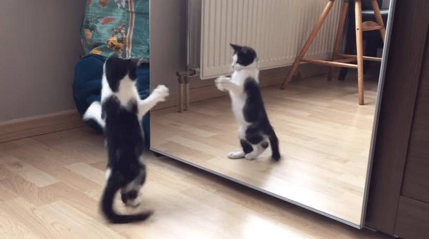 おまえは誰だ!!? はじめて鏡を見た子猫ちゃんの戸惑う仕草が...♡2