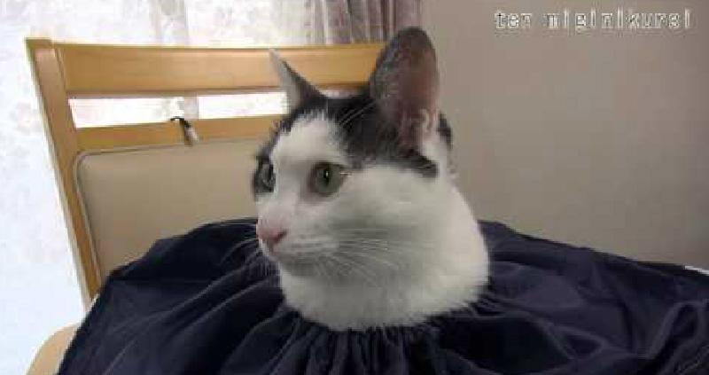 猫が生えてる(笑) 巾着袋の口から、ひょっこり顔を出している猫ちゃん