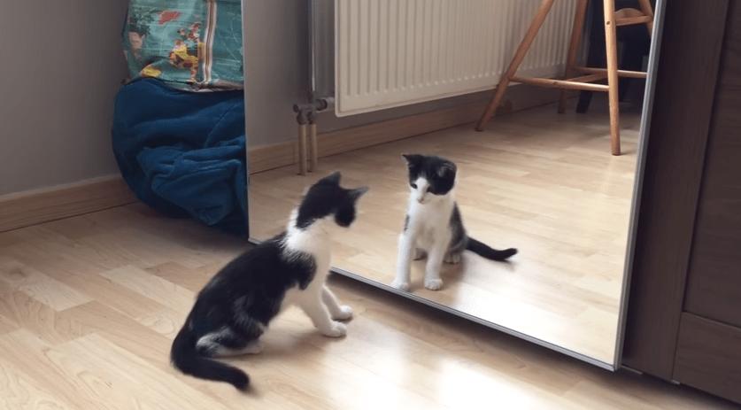 おまえは誰だ!!? はじめて鏡を見た子猫ちゃんの戸惑う仕草が...♡