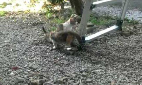 ありがた迷惑?トイレ中の子猫と、埋めてあげる子猫の友情(笑)