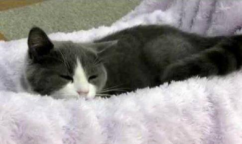 高田馬場「にゃんことカフェ」のタレント猫、お口モグモグモグ♪