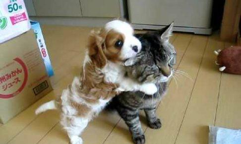構って欲しそうにじゃれついてくる犬を完全に無視する猫ちゃん(;´∀`)