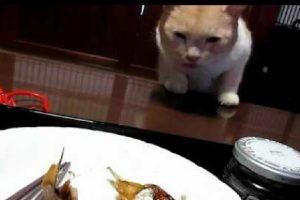 猫を飼ってる家での日常的な食事の風景。泥棒はいけませんよ!
