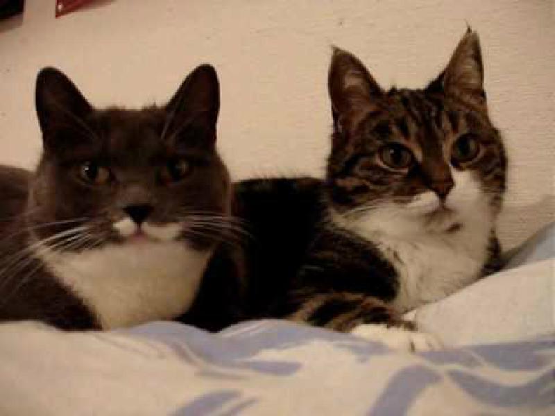 再生回数6000万回突破!猫ちゃんトークが世界で1番再生回数が多い猫動画です。