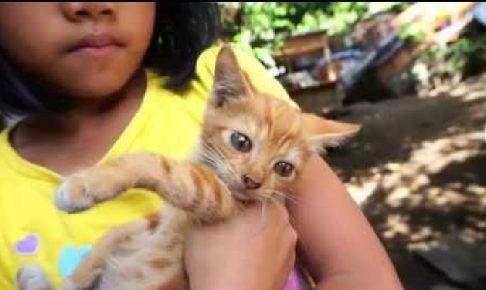 オレンジ色の子猫、女の子に抱っこされておとなしく目をパチクリ。