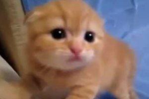 お母さんがいなくなった!ひとりでがんばって威嚇する子猫がかわいい♡