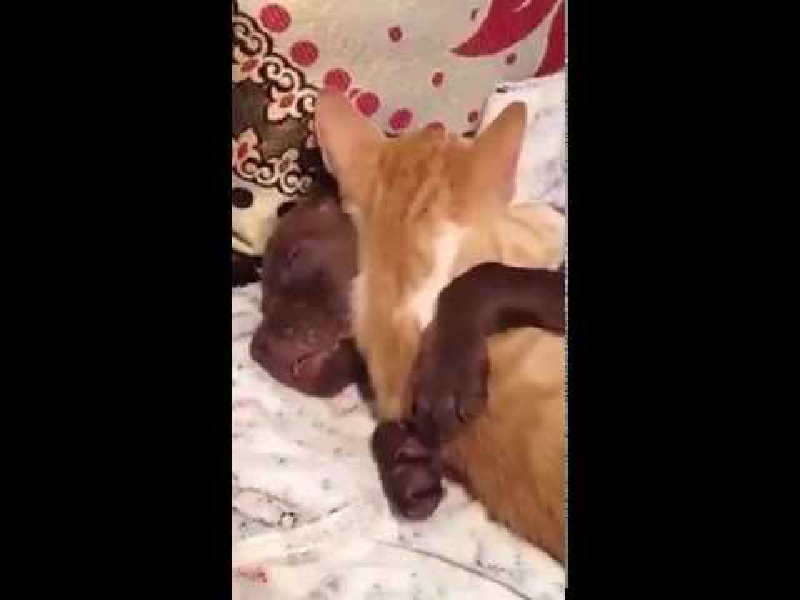 ワンちゃん&猫ちゃんのとってもラブラブ仲良し