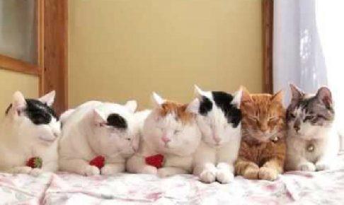 何の儀式?意味は分からないけど目が離せない6連の猫ちゃんたち♪