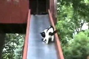 おまえもか!子猫トラップな滑り台に次々と引っかかる子猫たち