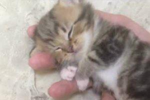 まさに天使!可愛すぎる子猫を手に乗せたら破壊力が半端ない