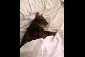 アタシ、もう寝るから…話しかけないでねっ。キジ猫ちゃん