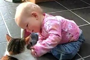 猫と赤ちゃんの会話集!!猫に話しかける赤ちゃんはいつだって真剣
