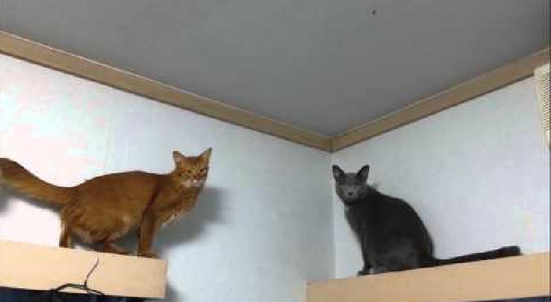 天井にとまっているハエが気になって仕方がない猫さん(笑)