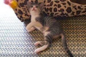 すやすやとのんびりくつろいでいる猫さんに訪れた驚きの瞬間!!