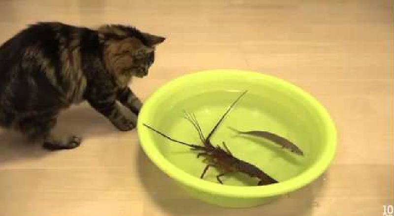 猫と、活きエビ。そう、それです。そういうことです。