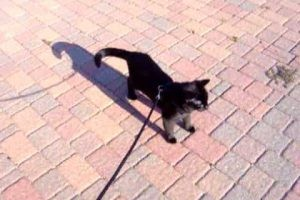 とある天気のいい日曜日。気まま黒猫ちゃんとお散歩したい!