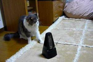 リズミカルな猫ちゃん♫メトロノームと完全に同期しています