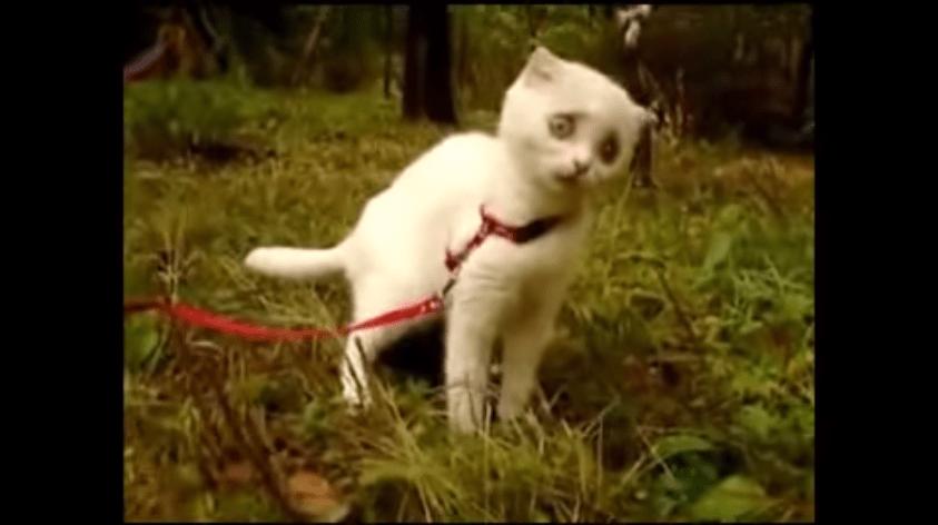 ヤンキー猫