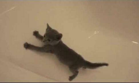 つるつる滑るバスタブに奮闘する可愛い子猫がたまらない
