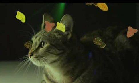 パーリィー猫ーポォー!猫だってEDM大好きニャン!