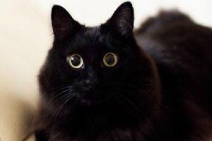 しゃべる猫!といえばしおんちゃん♡「おかえり~」完全にしゃべっています!