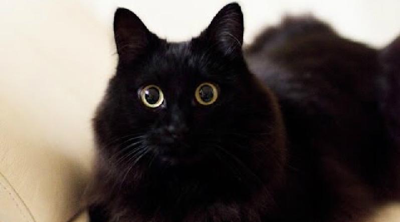 しゃべる猫!といえば、しおちゃん♡「おかえり~」完全にしゃべっています!