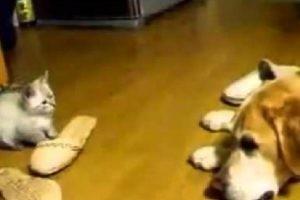 決定的瞬間!格ゲーのような子猫のアタックに怒るよりも困惑の犬