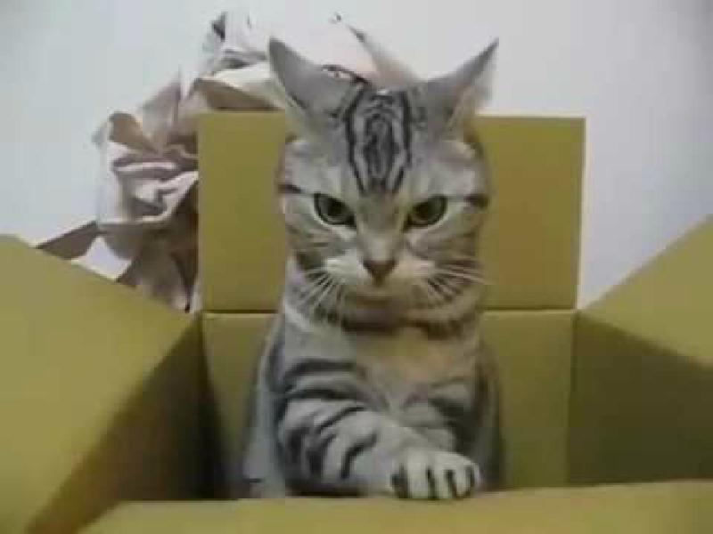 ただただひたすらに・・・・・なにかがツボった猫ちゃん(笑)