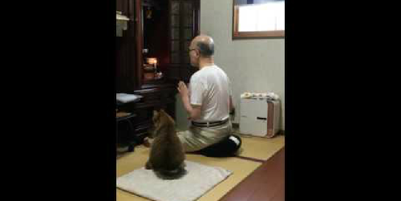 きちんとお座りをしてじっとお経を聞いている猫ちゃん♪