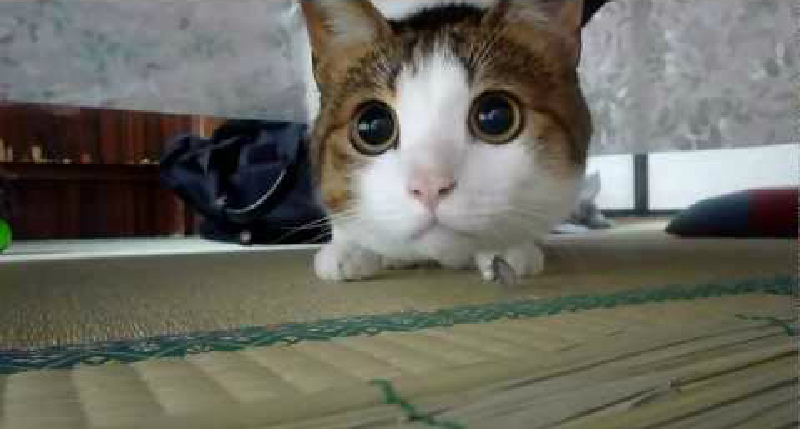 目だけではなく、顔もまん丸に!獲物に集中しすぎて大変なことに♡